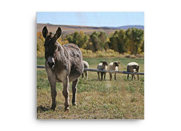 12x12 Sheep Donkey