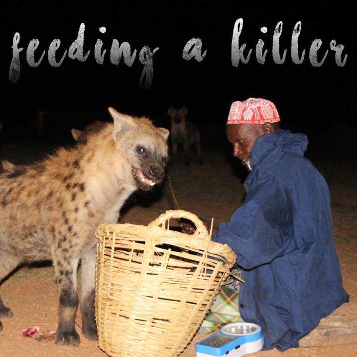 Hyenas: feeding a killer in Ethiopia