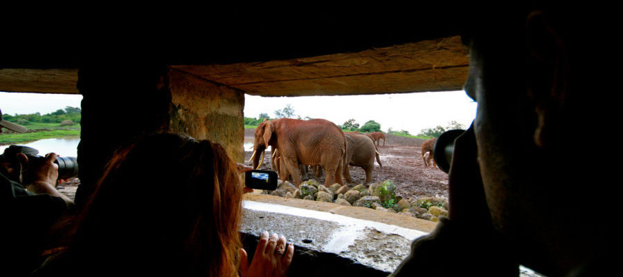 The viewing hut in The Ark in the Abadares National Park, Kenya