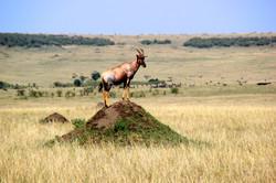 The Masai Mara, Kenya