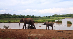 Abadares National Park, Kenya