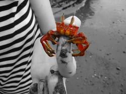 Crab in Ecuador