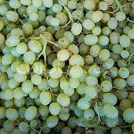 grape 3.jpeg