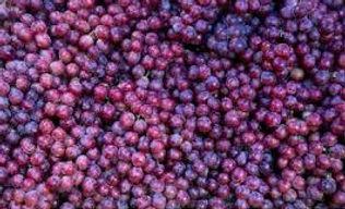 grape 2.jpeg