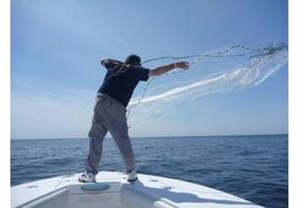 Image of Deck Hand Netting Fresh Bait for Trip