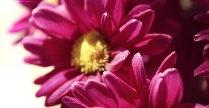 Flower_4 (1).jpg