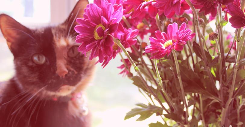 Flowers_3 (2).jpg
