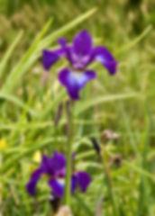 Hobart Naturopath