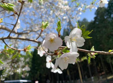 春のおとずれ