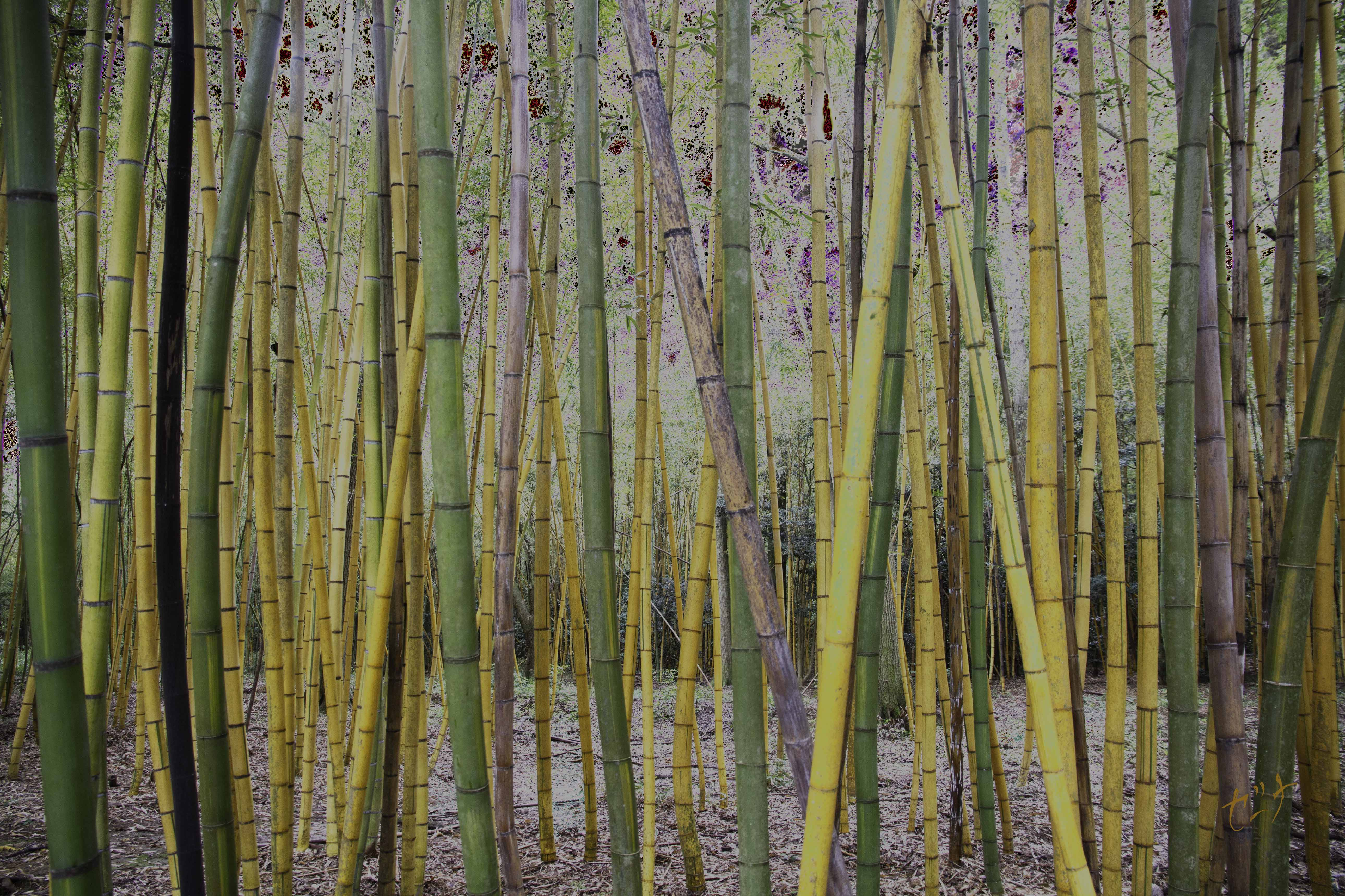 Bamboo-zzle