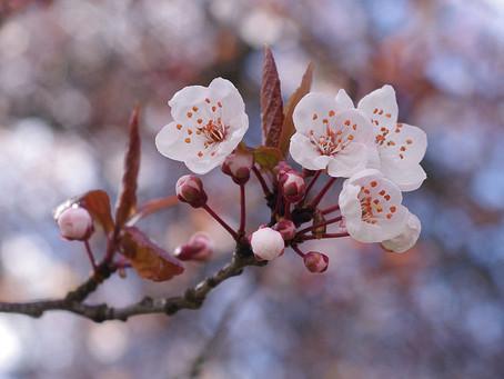 "Be Careful of ""Shigatsu-Byo"" & ""Gogatsu-Byo"" in Spring!"