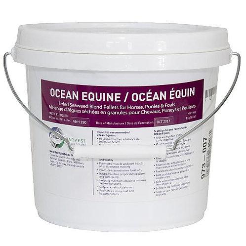 Océan équin de Lozana health