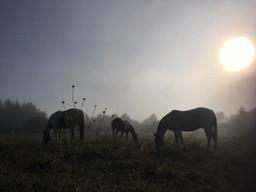 Hippi-que & Compagnons Jessica Skene Photographie brume matin