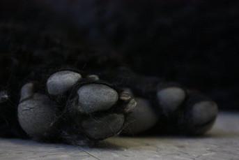 Hippi-que & Compagnons Jessica Skene Photographie patte chien