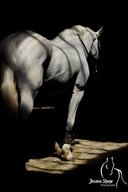 Hippi-que & Compagnons Jessica Skene Photographie cheval ombre lumière potrait