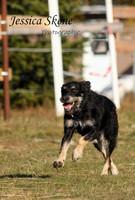 Hippi-que & Compagnons Jessica Skene Photographie chien cours