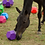Thumbnail: Balle Snack N Play de Parallax