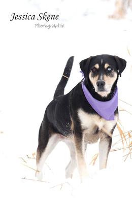 Hippi-que & Compagnons Jessica Skene Photographie portrait chien
