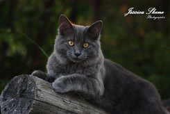 Hippi-que & Compagnons Jessica Skene Photographie potrait chat domestique