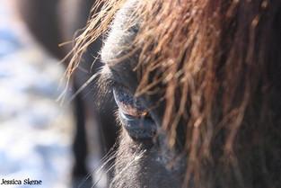 Hippi-que & Compagnons Jessica Skene Photographie oeil cheval