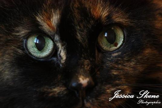 Hippi-que & Compagnons Jessica Skene Photographie Potrait yeux chat