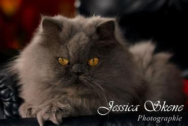 Hippi-que & Compagnons Jessica Skene Photographie portrait hermès chat persan