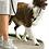 Thumbnail: Easy Walk de PetSafe