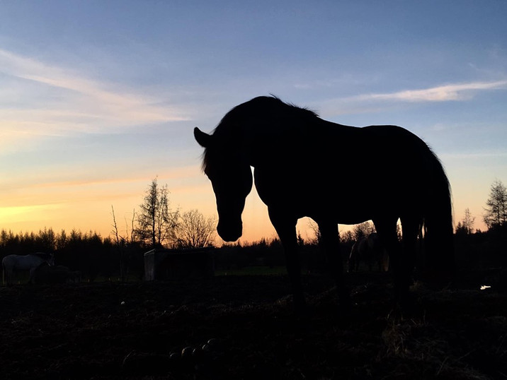 Hippi-que & Compagnons Jessica Skene Photographie cheval ombre lumière