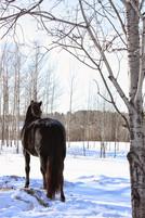 Hippi-que & Compagnons Jessica Skene Photographie potrait hiver cheval
