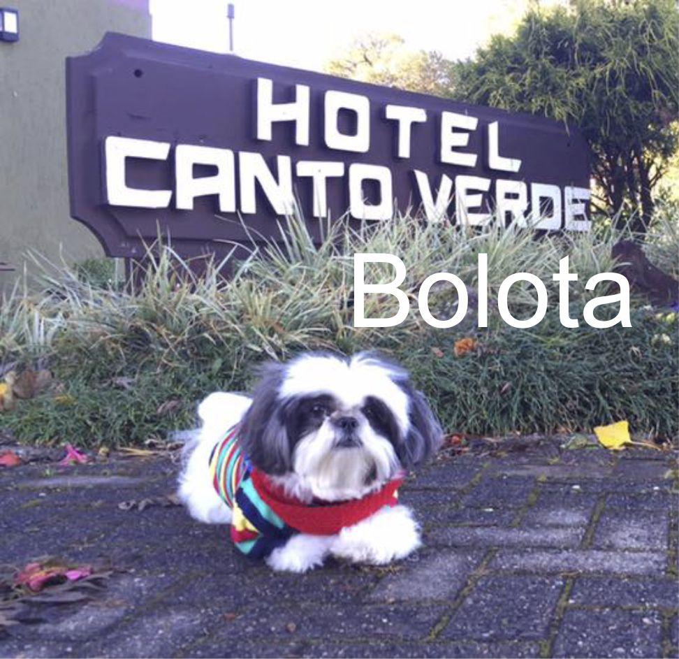 Bolota