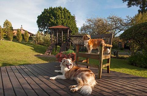 Pets do Hotel Canto Verde em Gramado RS