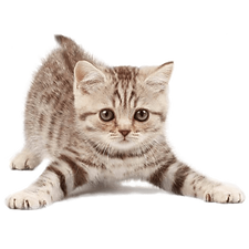 kisspng-cat-pet-sitting-kitten-dog-5b1cd