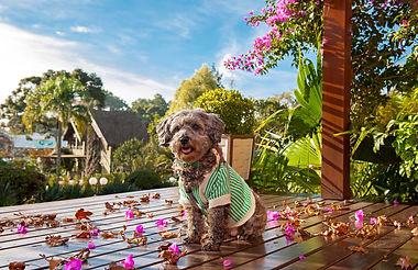 Pet friendly | Hotel Canto Verde | Gramado | Rio Grande do Sul