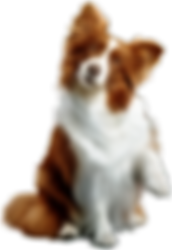 kisspng-puppy-dog-toys-chew-toy-rough-co