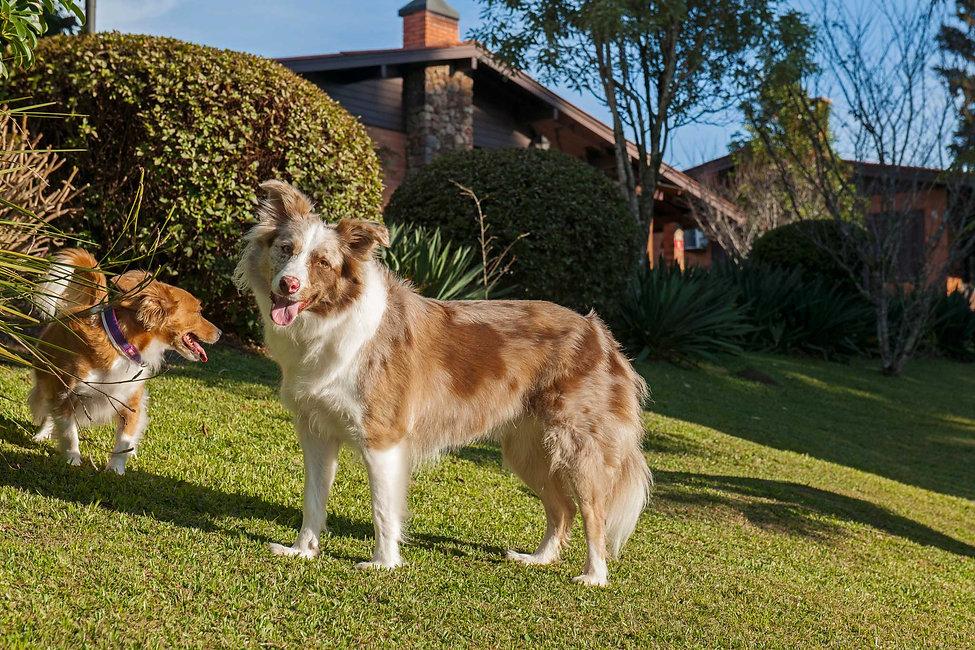 Hotel Pet Friendly em Gramado