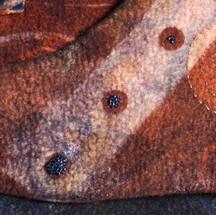 Discover-Detail.jpg