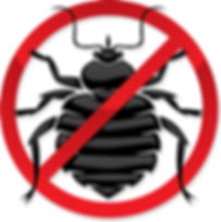 How to treat for bed bugs at home