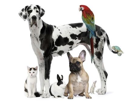 Healing Your Pets