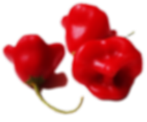 peppers-1049437_edited_edited.png