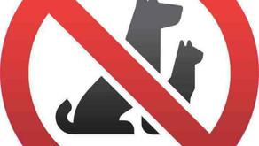 "Tenants Having Pets in ""No-Pet"" Condominium"