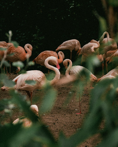 real life pink flamingos