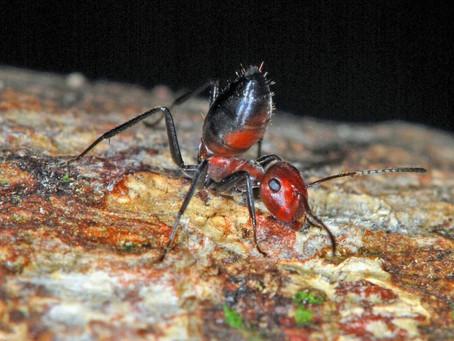 nova formiko eksplodiĝema ĵus malkovritas.
