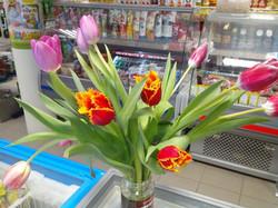 Маркет тюльпаны