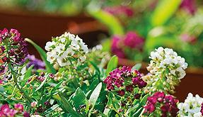 Easy-peasy Spring sensations