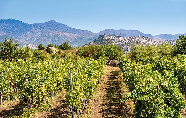Vineyard on the mount Etna