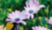 Spring – the bringer of flowers