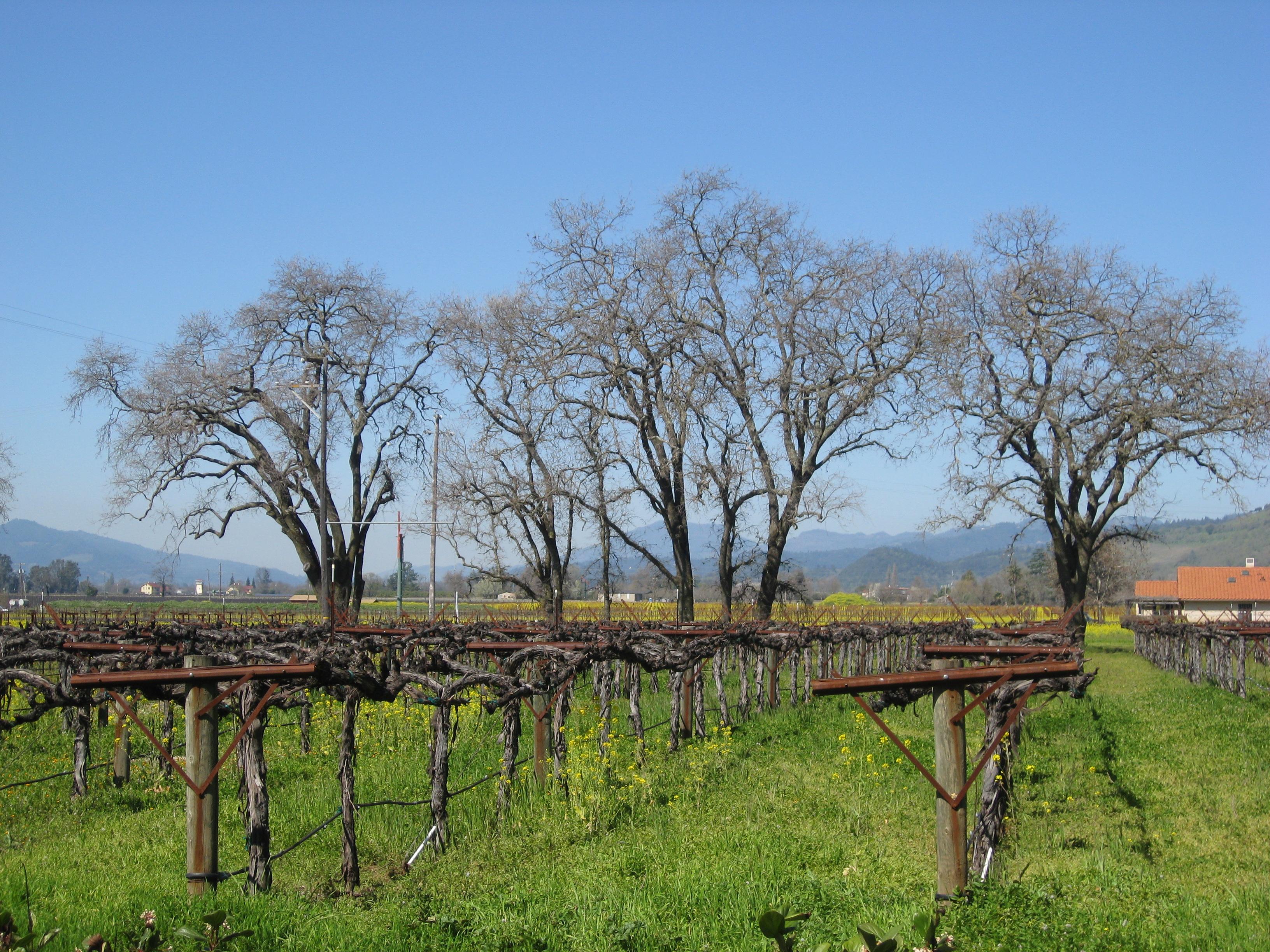 Vineyards of Mendocino