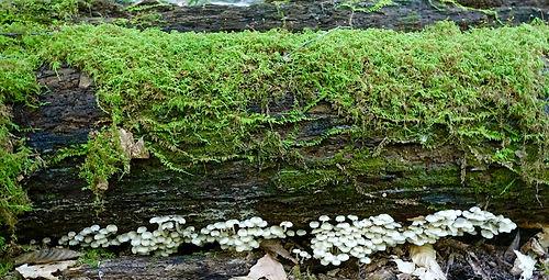 annette moss and mushrooms.jpg