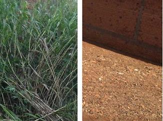 terreno antes e depois.jpg