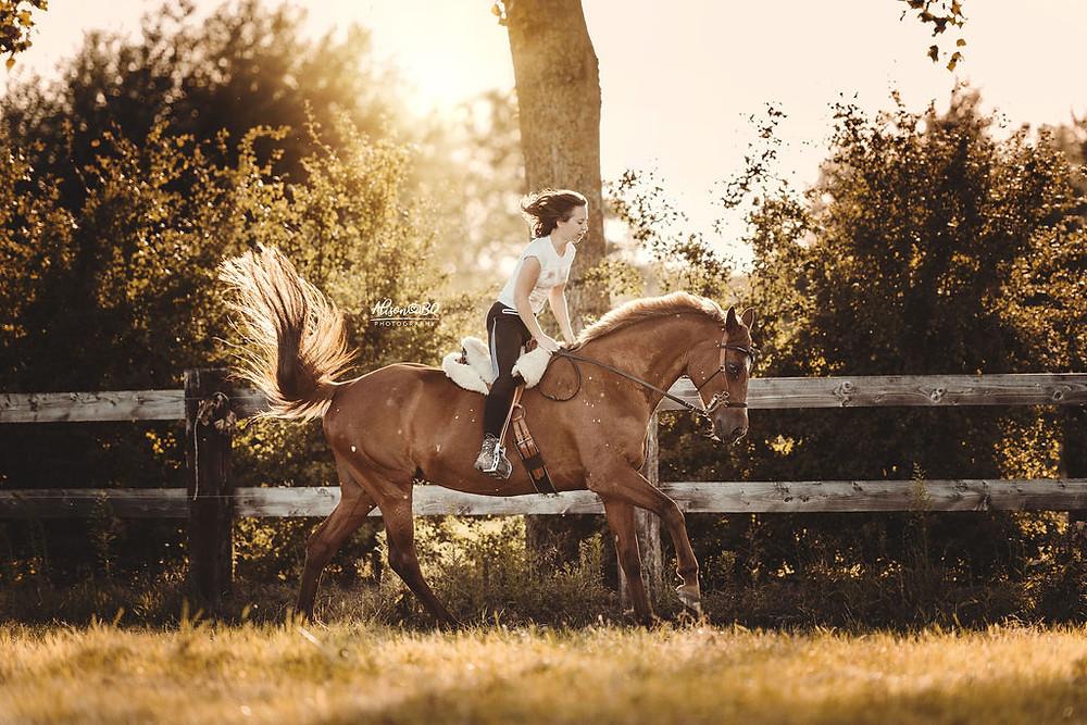 gouden uur, paardenfotoshoot